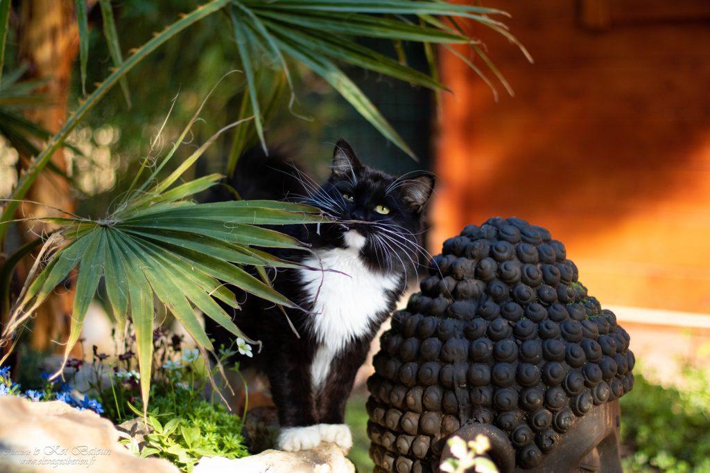 Han regarde le palmier