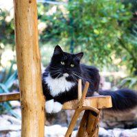 Han sur son arbre à chat