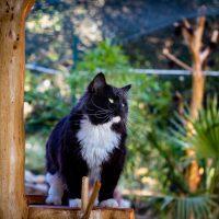 Han sur son arbre à chat regarde au loin