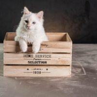 Siropchik dans une boite en bois