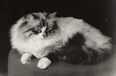 Mars chat siberien