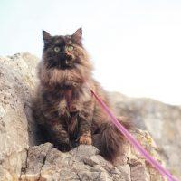 Cassiopeia - Kot Baioun - Promenade sur les rochers