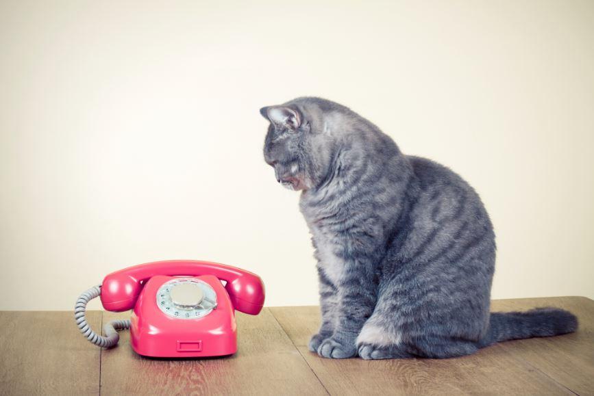 Chat qui telephone