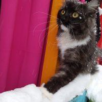 Hilda joue dans la neige en Russie