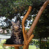 Cama sur l'abre à chat- Chatterie du Kot Baïoun