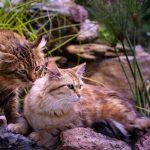 Lukeria et Fima Près de la cascade - Chatterie du Kot Baïoun